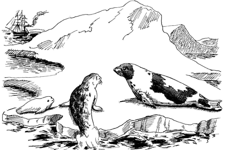 Раскраски Раскраска Дельфинчик рыбки и морская звезда с ...
