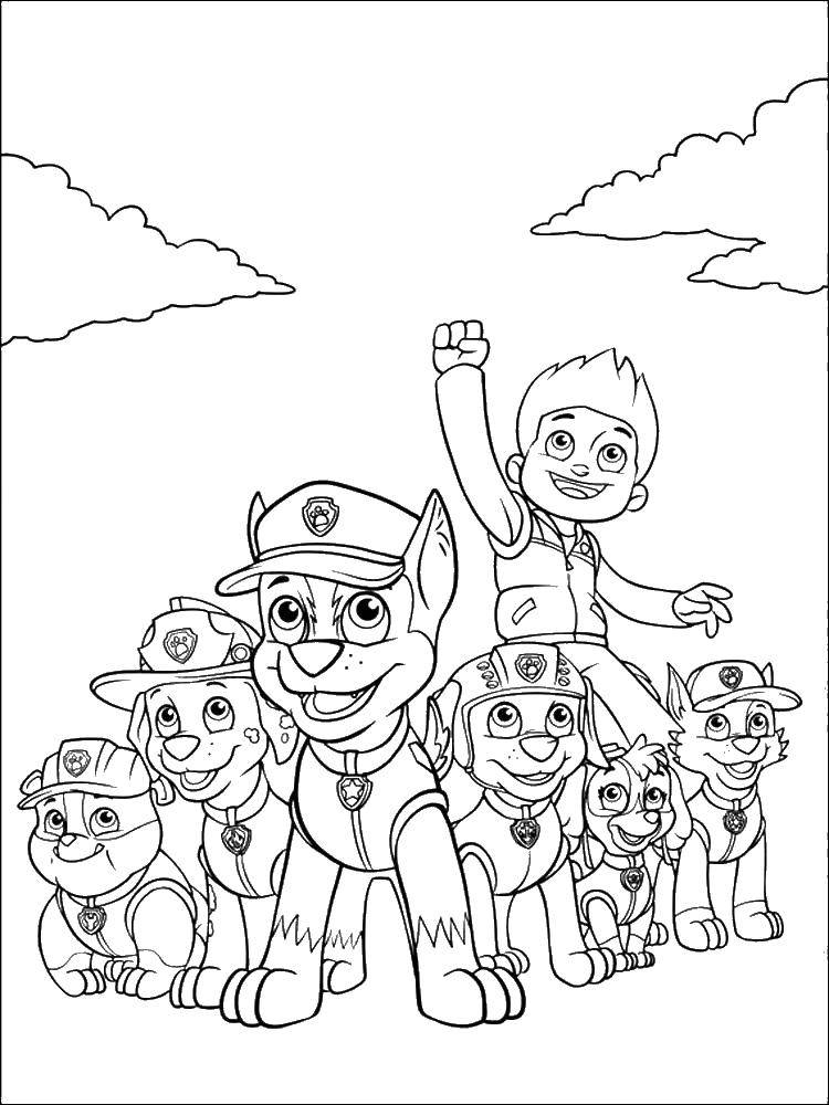 Coloring sheet paw patrol Download animals, kitten, cat, nature.  Print ,Cats and kittens,