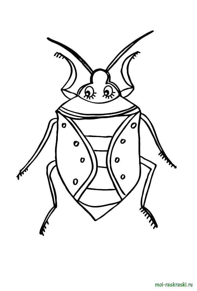 Картинки раскраски жука для детей распечатать
