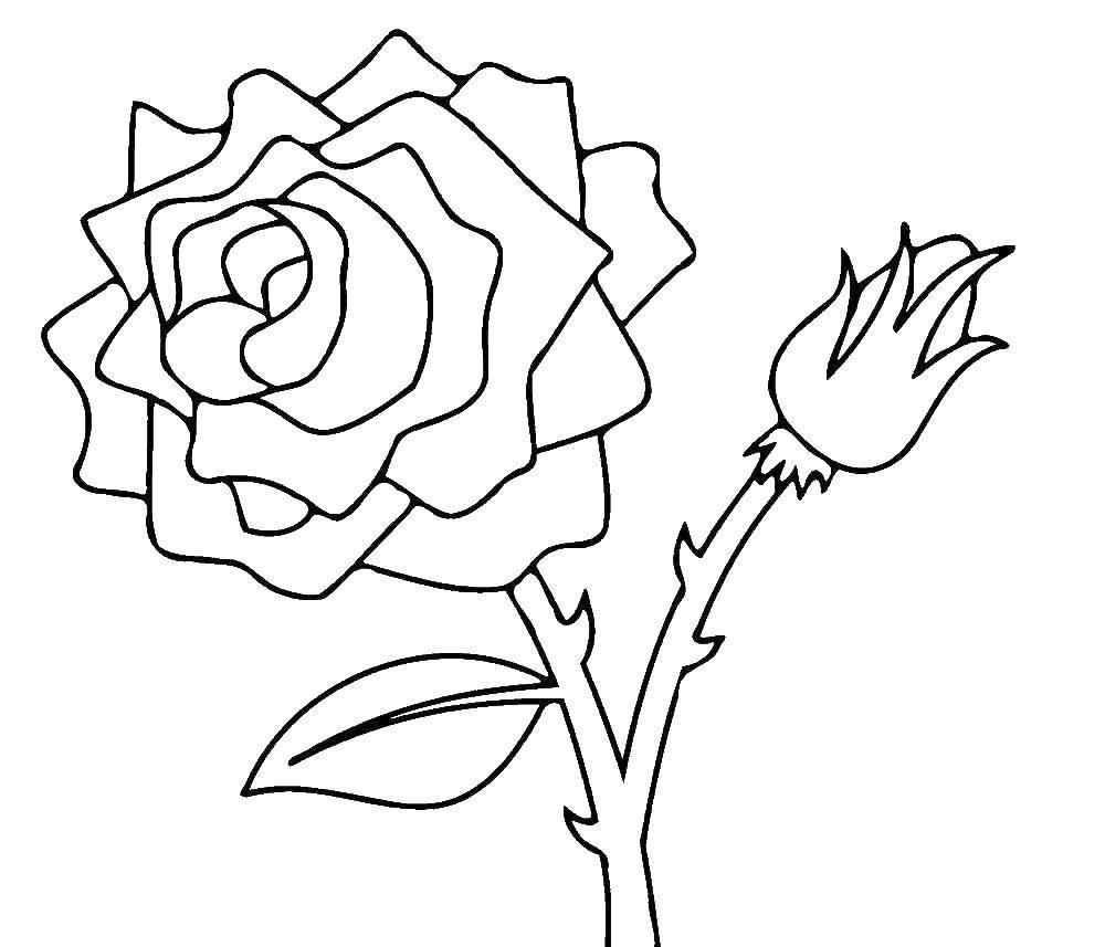 Картинки цветов нераскрашенные