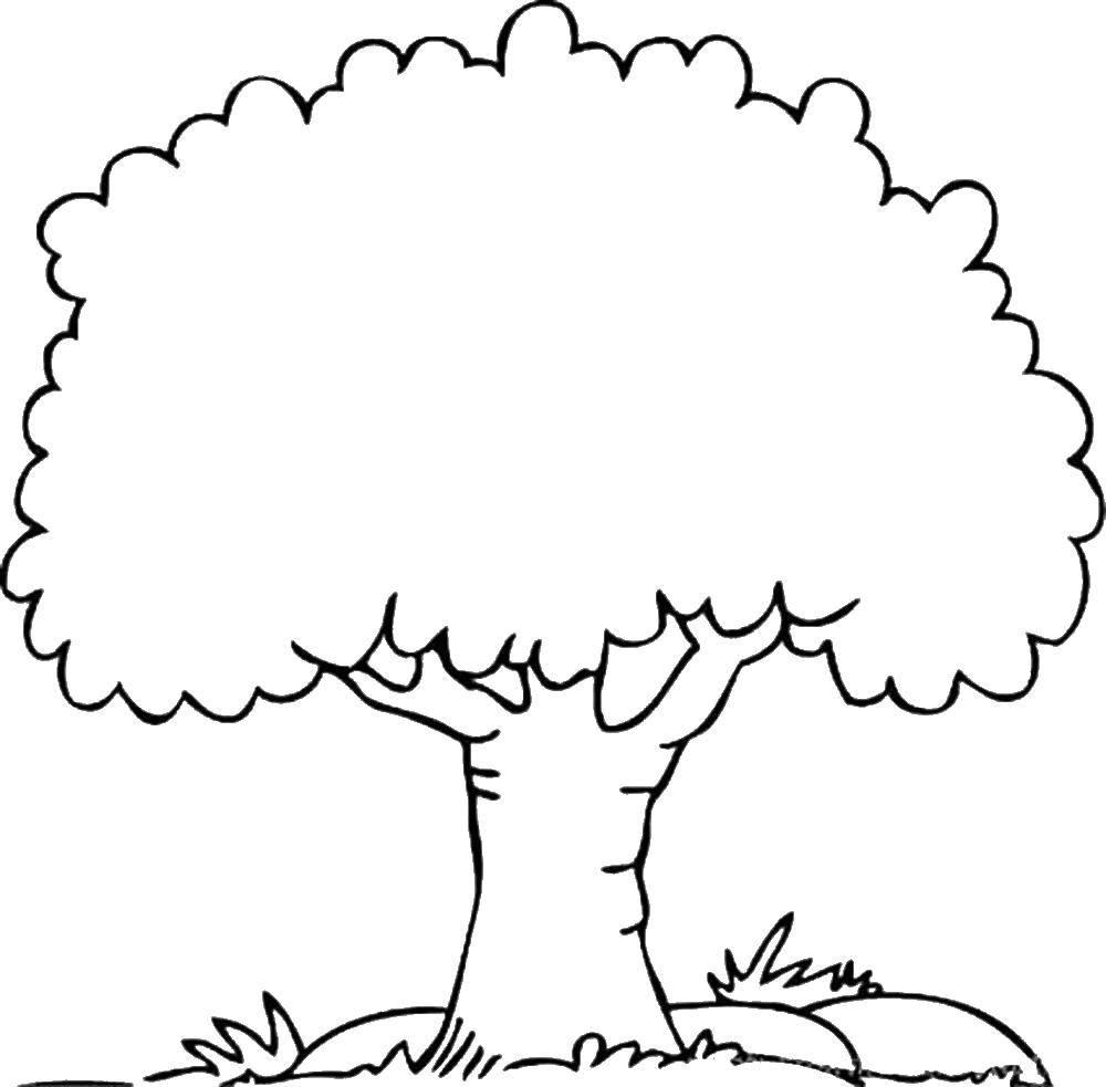 распечатать дерево фото правильно
