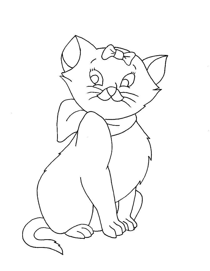 Не разукрашенные картинки кошек