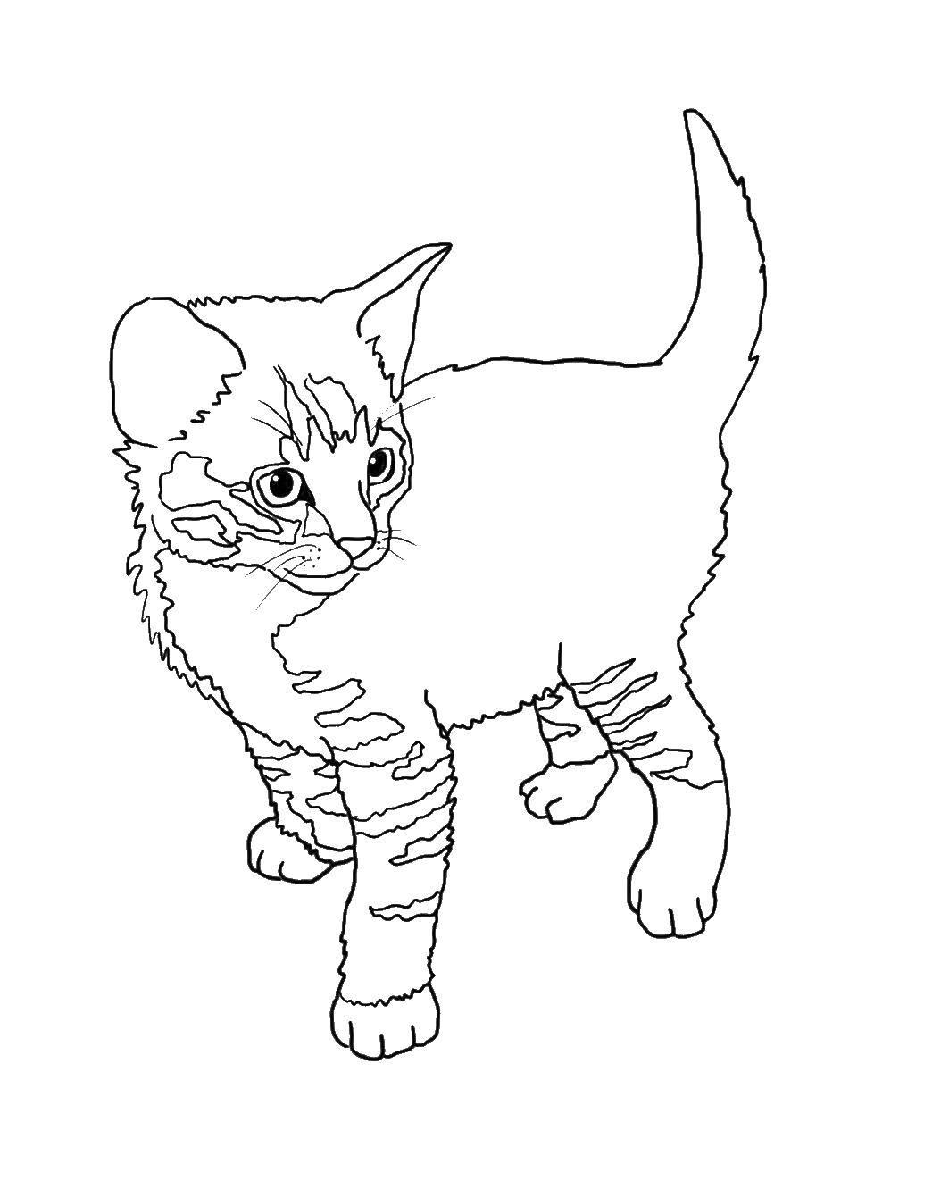 помогите реалистичные коты раскраска обои