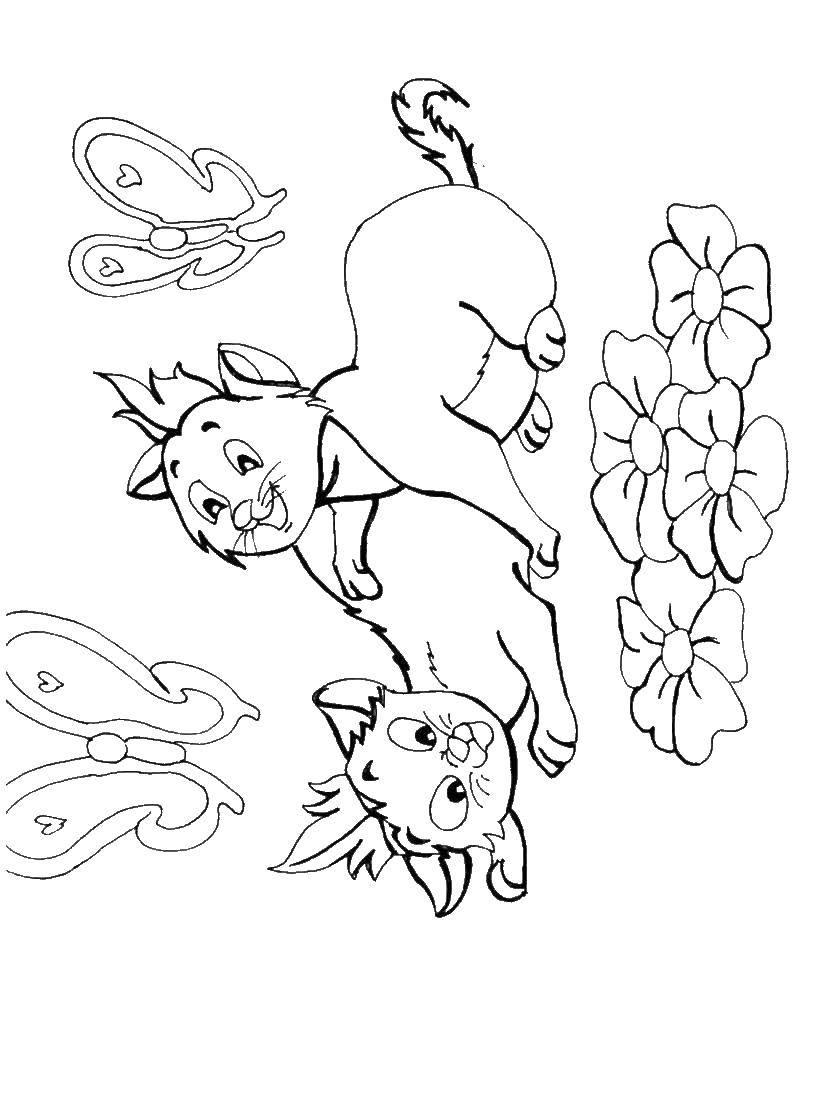 Раскраски котят, Раскраска Маленький котенок Коты и котята.