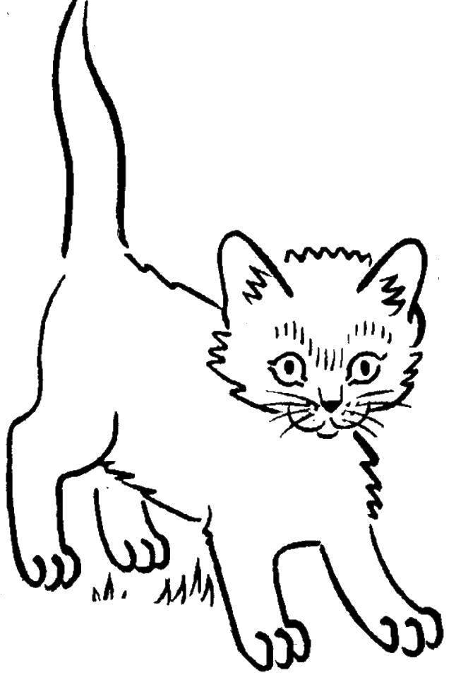 Раскраски корзинке, Раскраска Кошка спит в корзинке Коты и ...