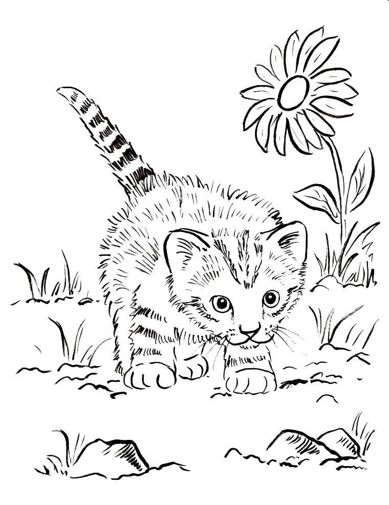 Coloring The kitten and nature Download animals, kitten, cat, nature.  Print ,Cats and kittens,