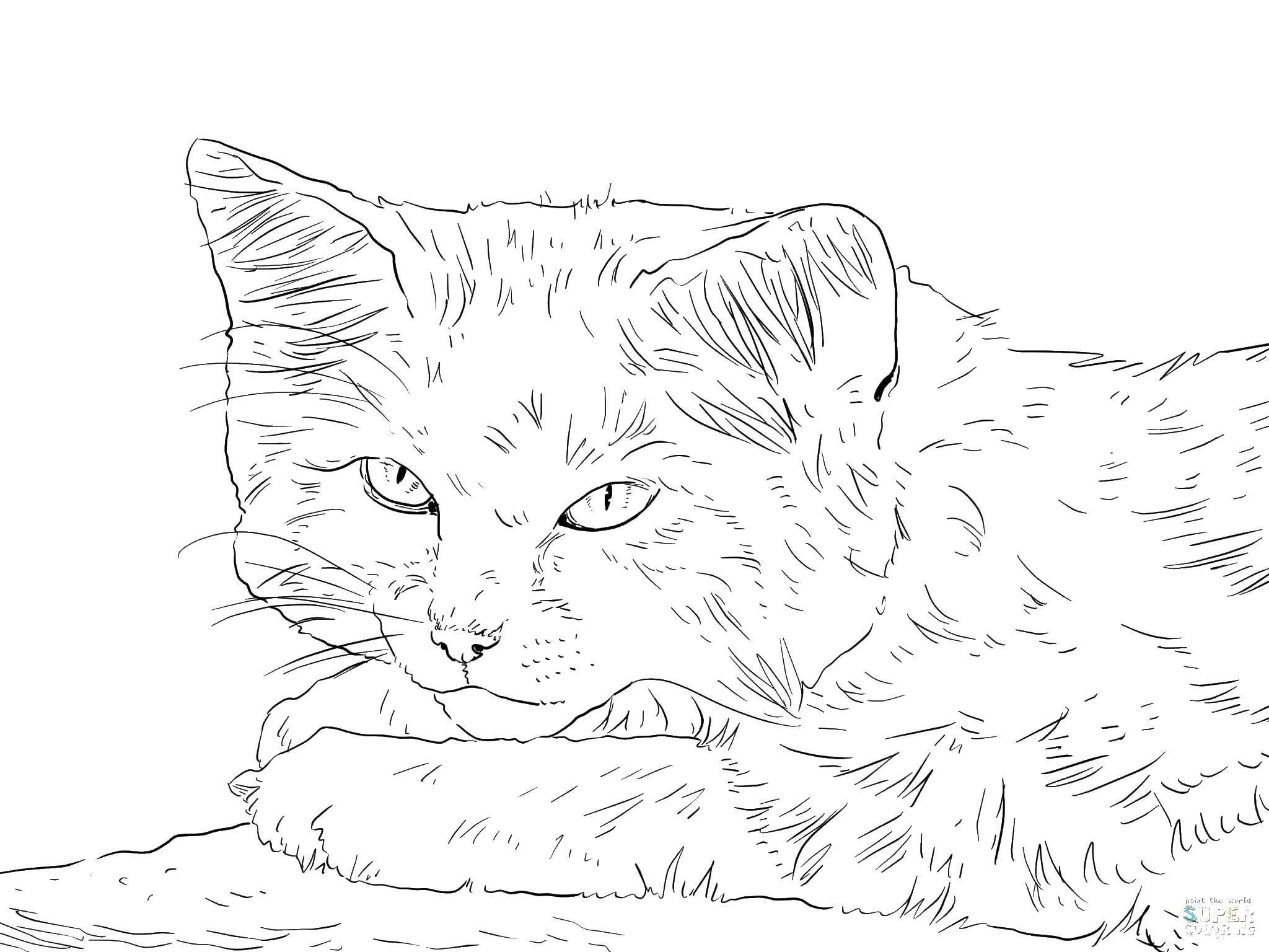 быстро надежно реалистичные коты раскраска булычев пишет очень