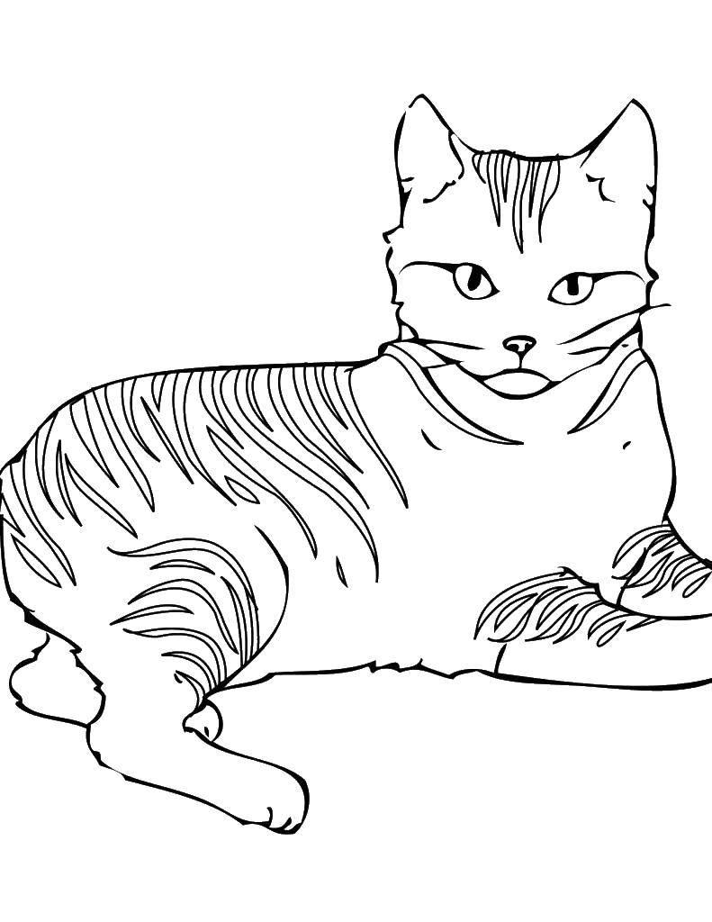 Картинка кошки раскраска