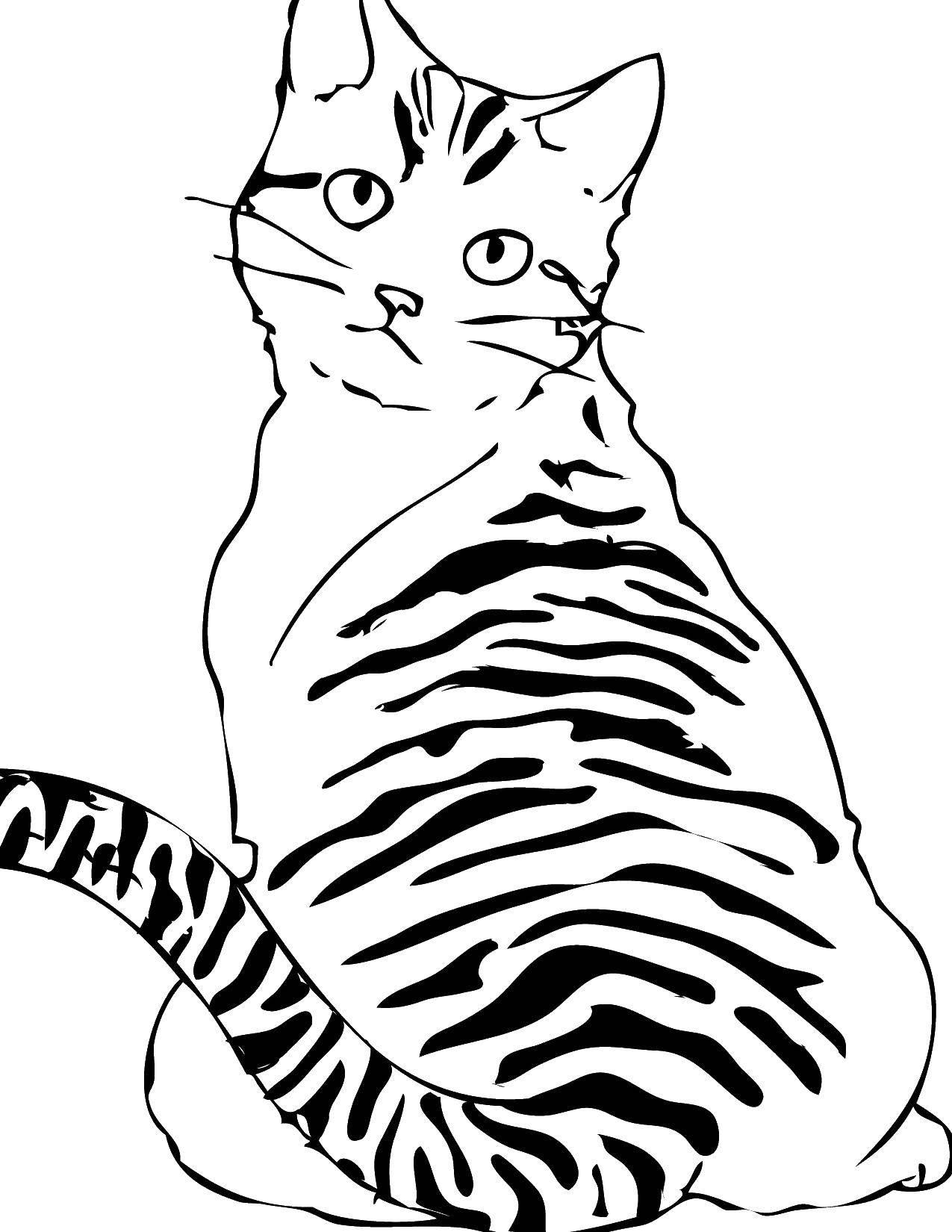 Рисунки коты картинки черно белые