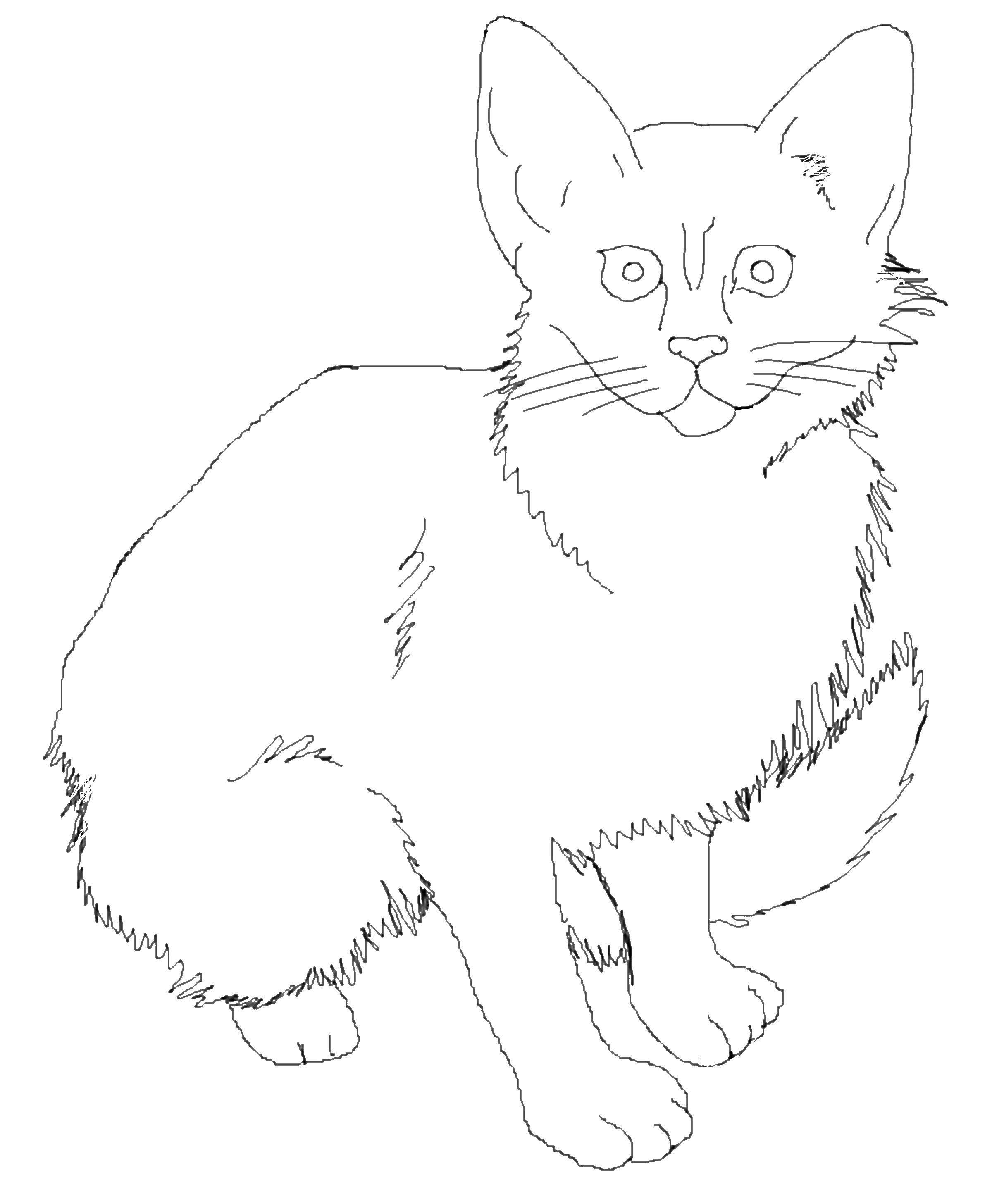 агентствах девушки реалистичные коты раскраска посуточно