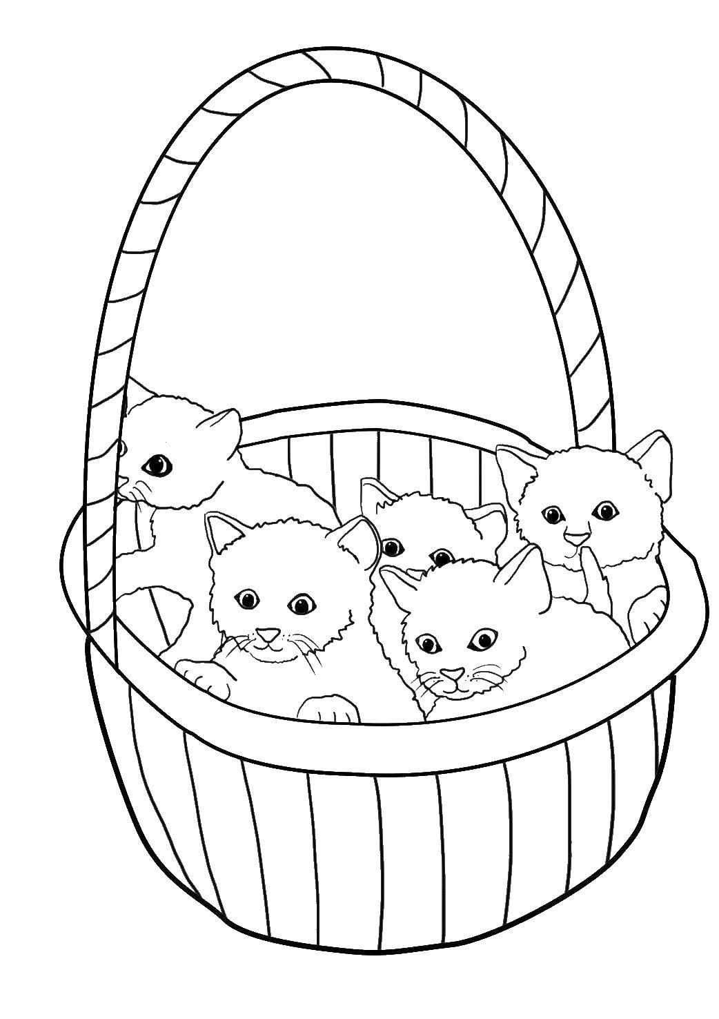 Раскраска Корзинка с котятами Скачать ,Животные, котята, корзинка,.  Распечатать