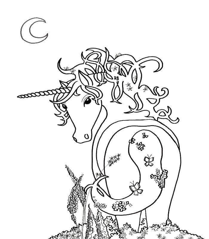 Coloring sheet Animals Download .  Print