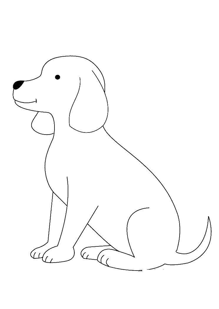Раскраска Собака Скачать ,собака,.  Распечатать