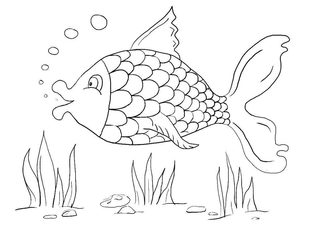 раскраска картинки про рыбок
