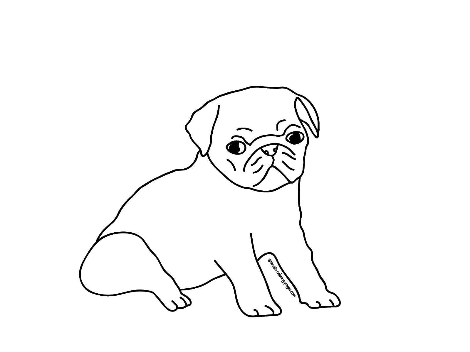 картинки раскраски щенки мопса такие собачки, которые
