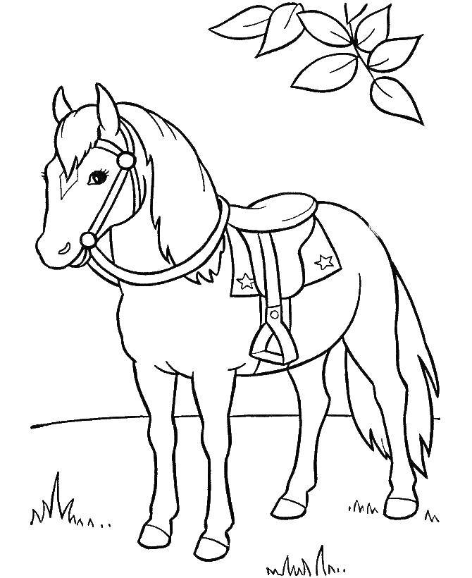 Coloring sheet Animals Download month, angel, night.  Print ,coloring,