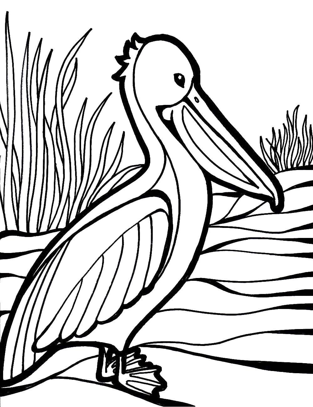 Coloring sheet Animals Download Jesus , religion, Moses.  Print ,Adam and eve,