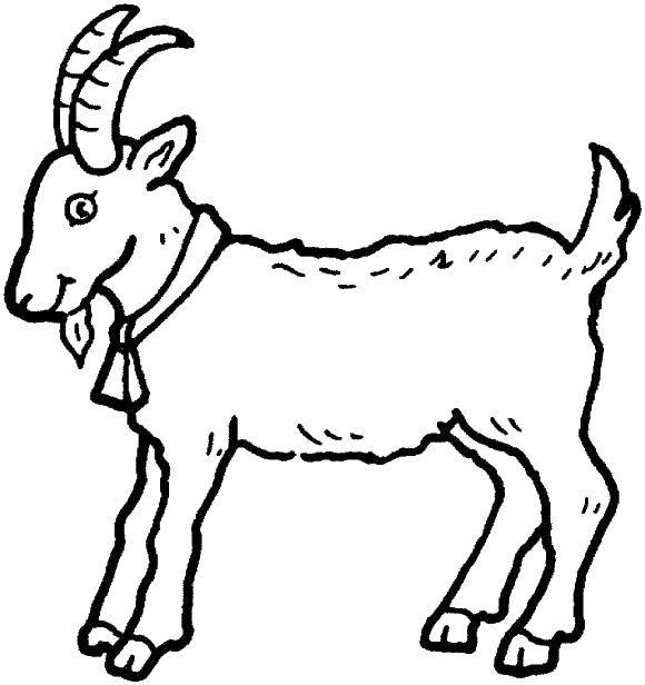 Coloring Goat. Category animals. Tags:  animal, animals, goat, goat.