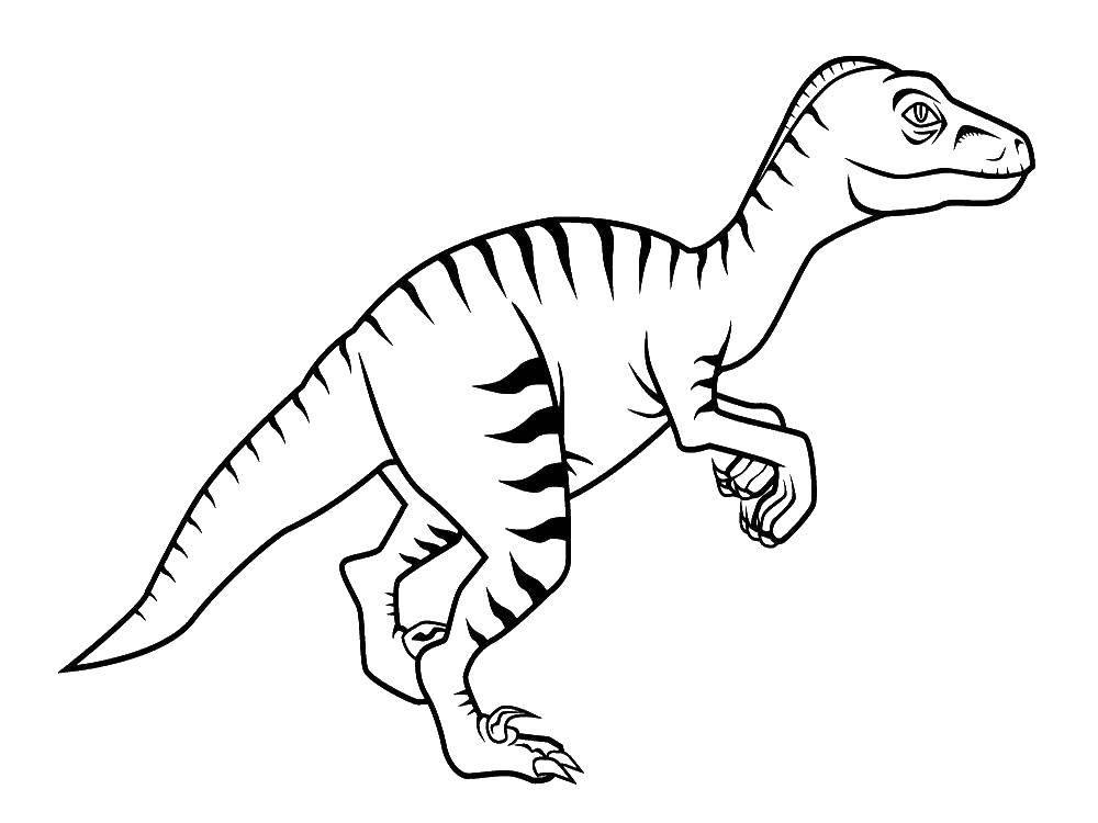 Coloring sheet dinosaur Download Patterns, flower.  Print ,patterns,
