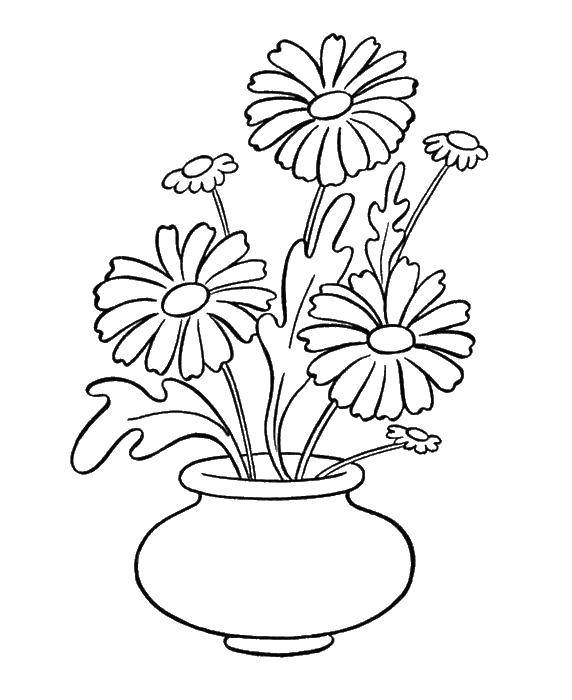 Coloring Flowers in a vase Download flowers, plants, buds, petals, vase,.  Print