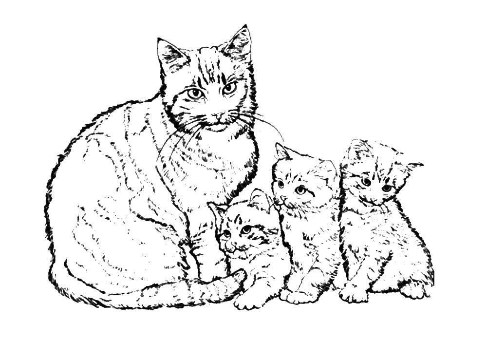 Coloring Cat family. Category Pets allowed. Tags:  animals, cat, kittens.
