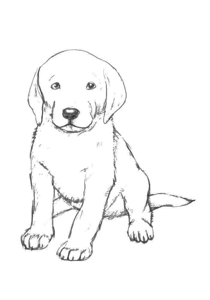 Картинки рисунки собак больших и маленьких