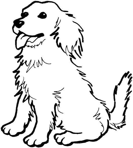 Раскраски собак, Раскраска Милашка щеночек собаки щенки.