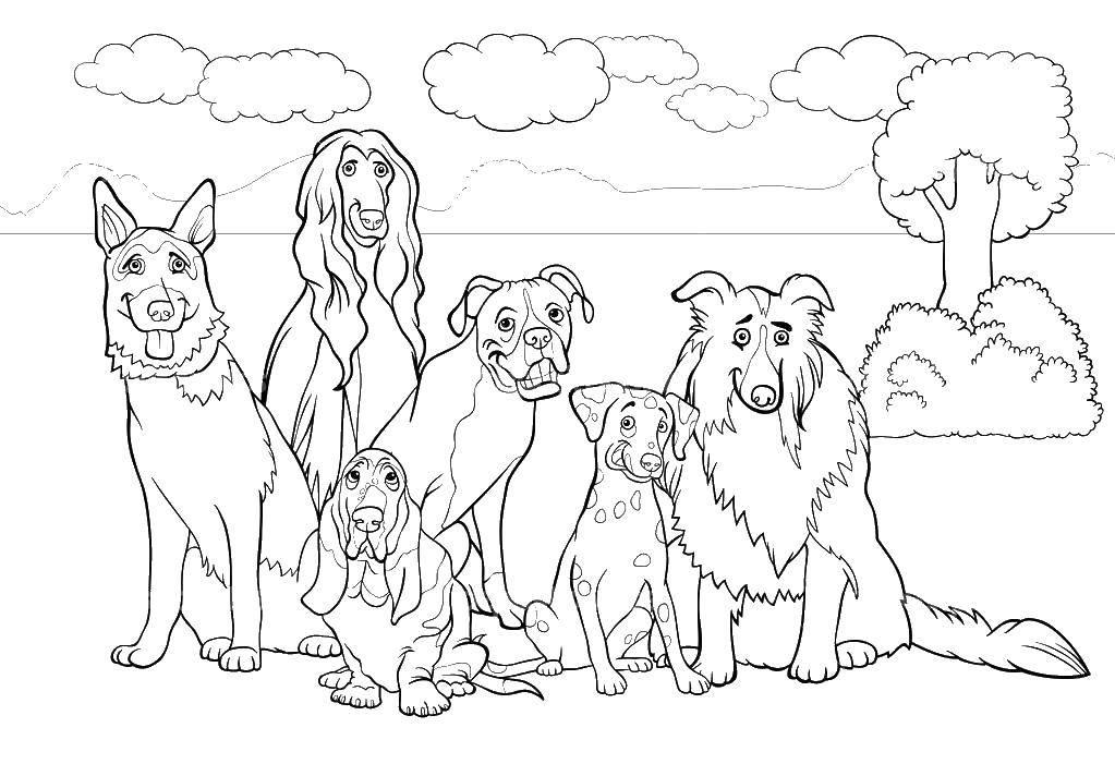 Раскраски Раскраска Собаки собаки всех пород, скачать ...