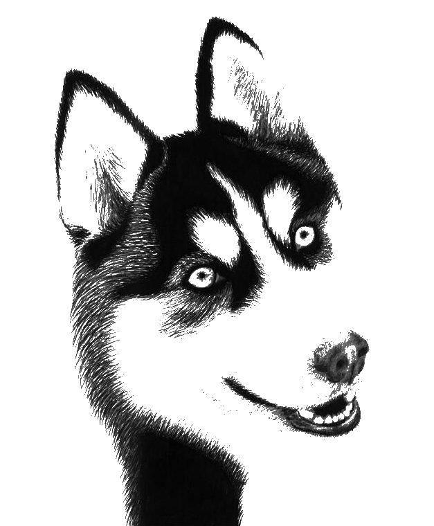 Розмальовки хаскі, Розмальовки Солбака хаскі собаки хаскі.
