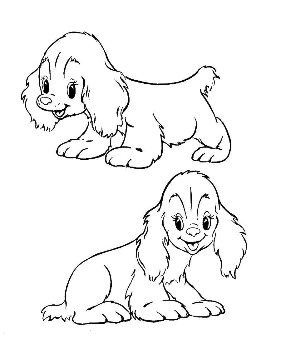 печатать картинки собак