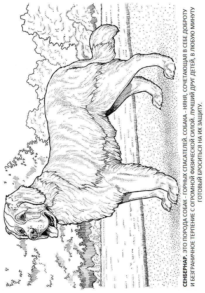 Coloring sheet dogs Download animal, animals, goat, goat.  Print ,animals,