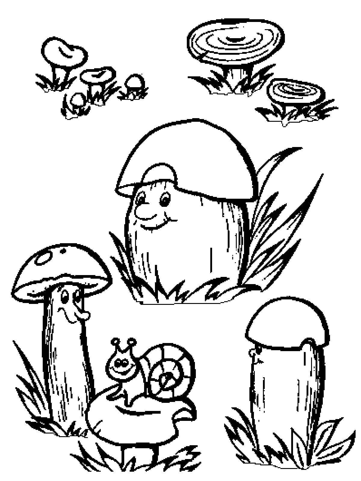 мебель раскраска на тему лес грибы ягоды данной