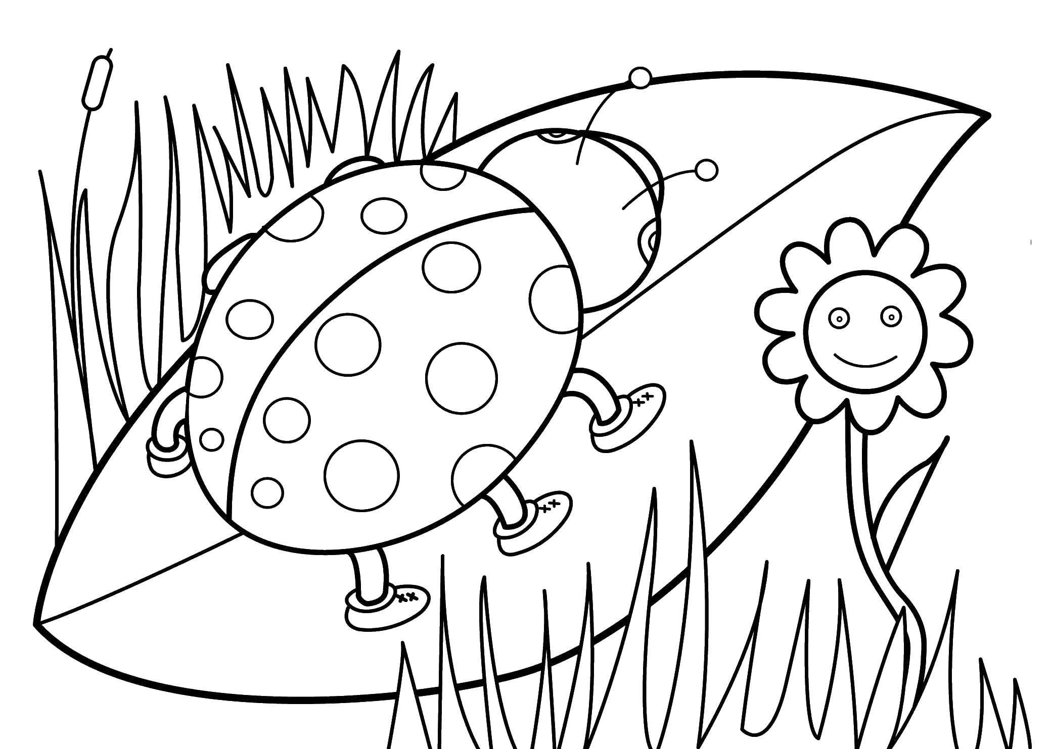Coloring Ladybug sitting on a leaf. Category ladybug. Tags:  ladybug.
