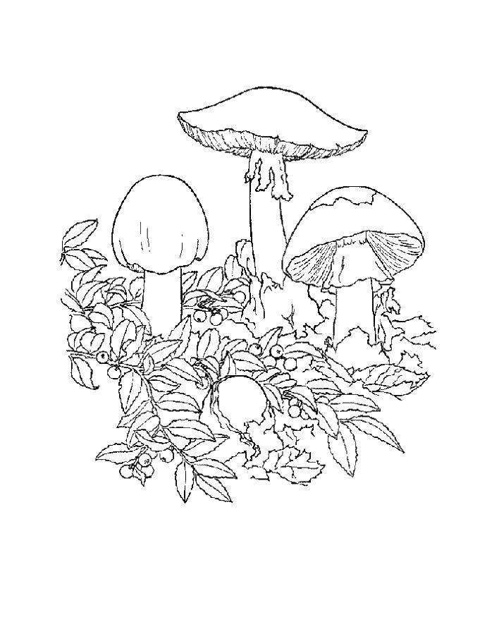 Раскраски корзина, Раскраска Корзина с грибами грибы.
