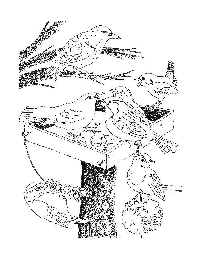 Coloring sheet birds Download parable, Bible.  Print ,religion,