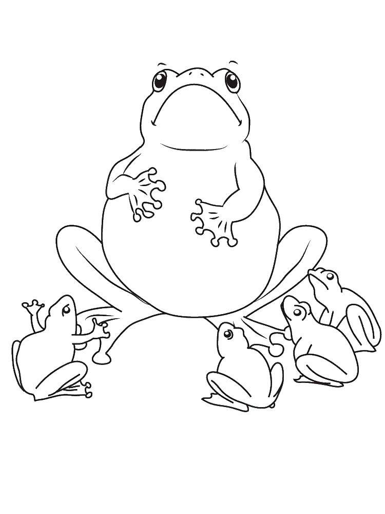 Coloring Toad leaguetime. Category the frog. Tags:  Reptile, frog.