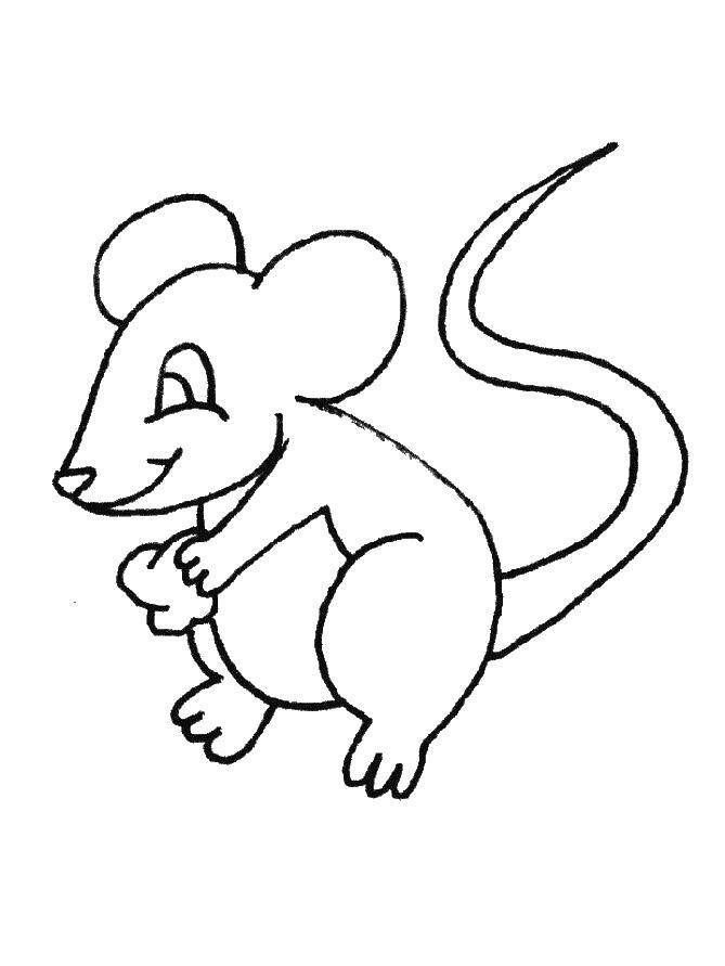 Coloring sheet mouse Download leaves.  Print ,autumn,