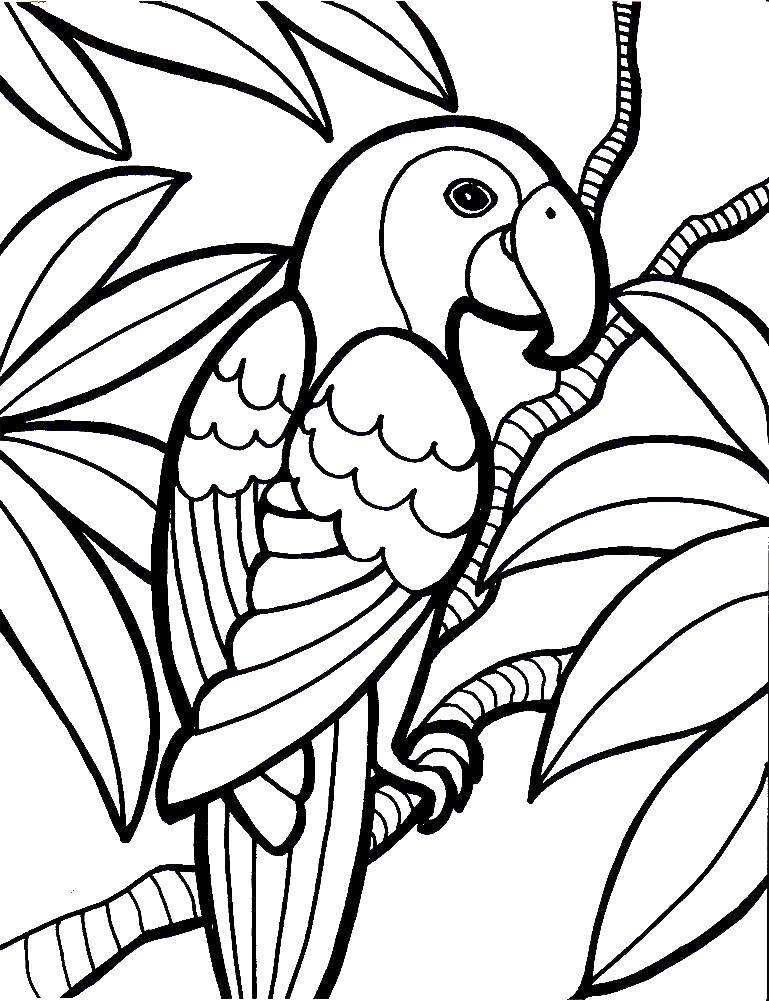 Coloring sheet birds Download fruit, banana.  Print ,banana,