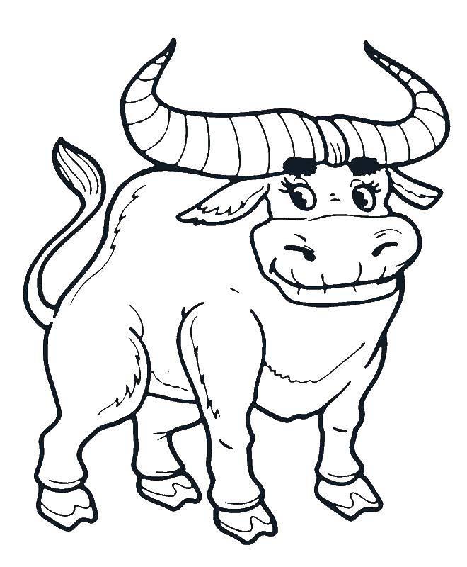 картинки раскрасок быков можно