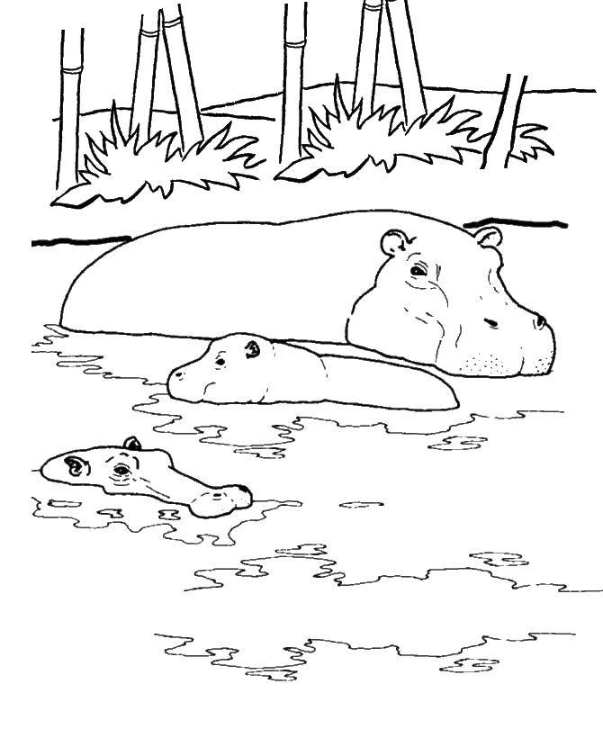 Coloring sheet Hippo Download Nature, forest, mountains, country.  Print ,Nature,