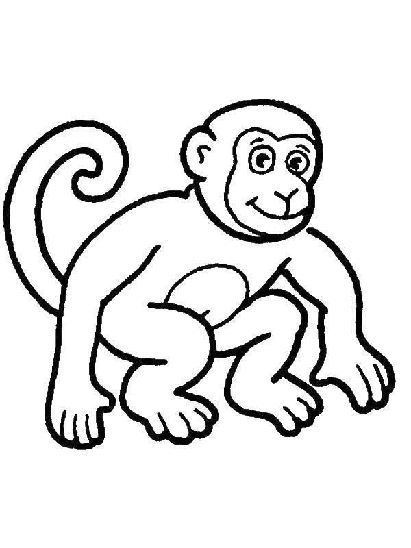 Картинки с веселыми обезьянами том, какую