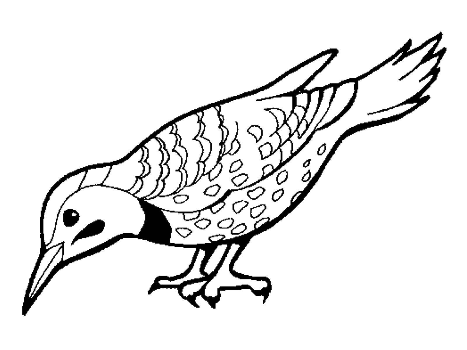 ними распечатать картинки птиц бладлайнс вышла