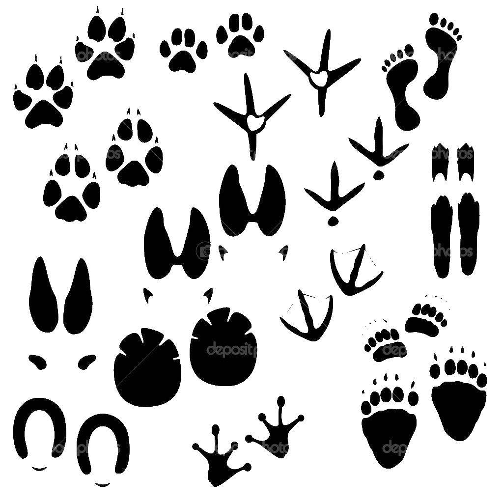 Coloring sheet Animal tracks Download watch, time.  Print ,watch,