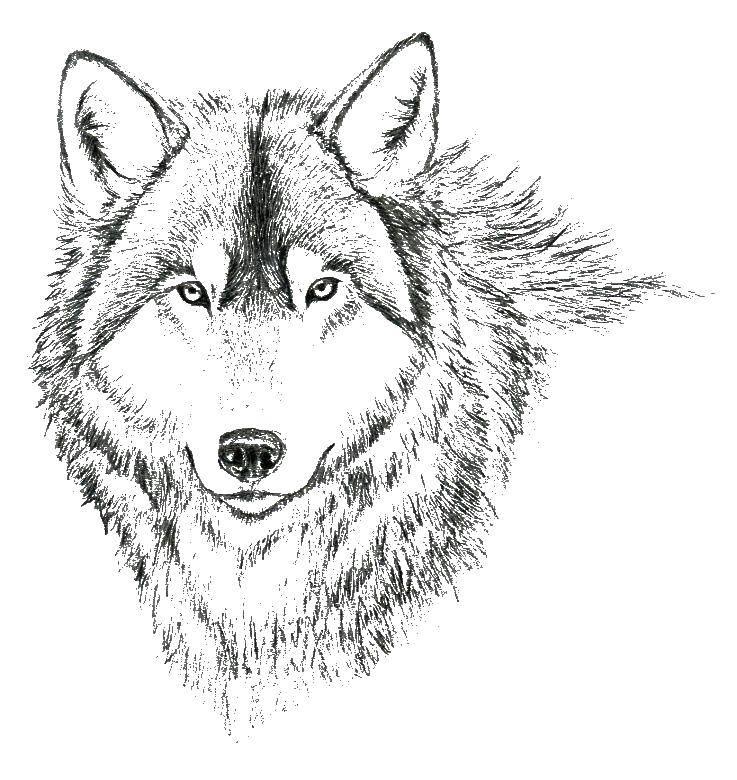 стиль картинки для раскраски волка применяется для