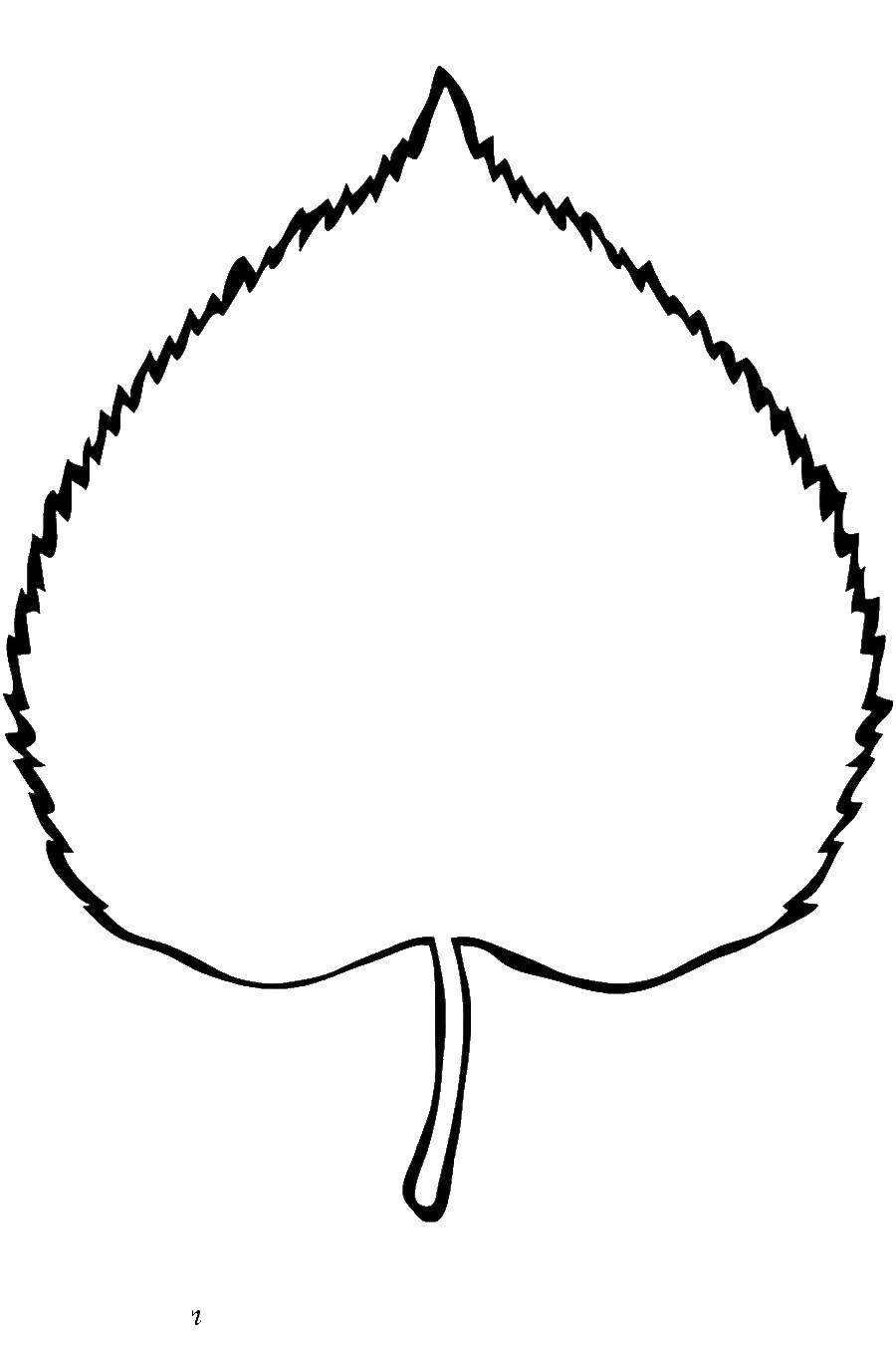 раскраска листья березы распечатать возвышенном перешейке