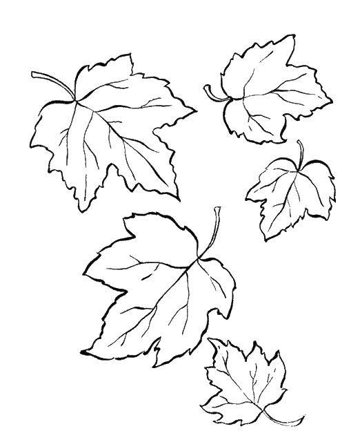 Раскраски Листья , Категория.