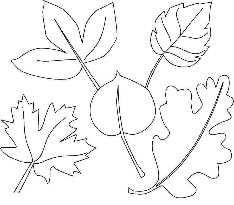 Coloring sheet leaves Download celebrity, basketball player, Allen Iverson.  Print ,coloring,