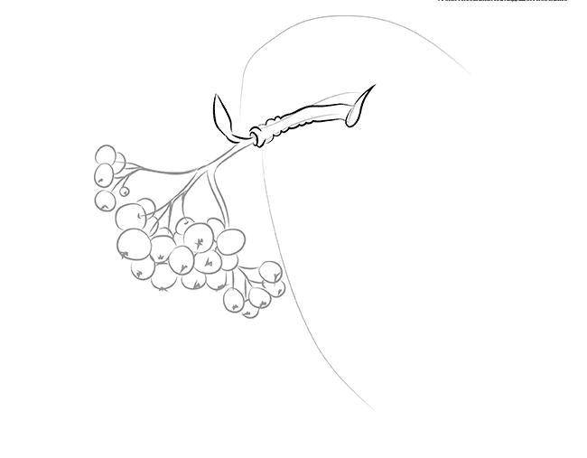 Coloring sheet the leaves of mountain ash Download .  Print