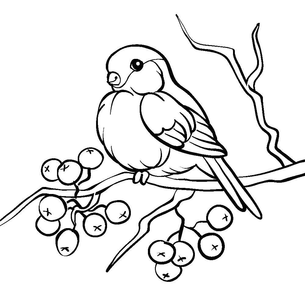 Coloring sheet the leaves of mountain ash Download Forest, birch.  Print ,the forest,