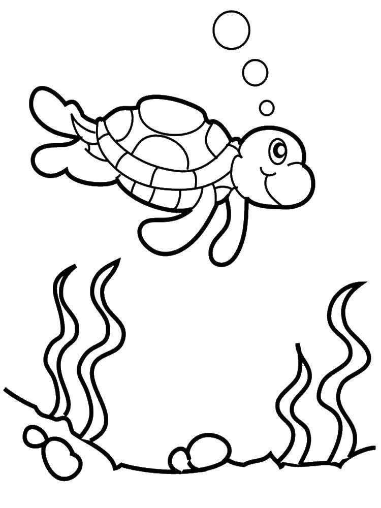 Coloring sheet turtle Download .  Print